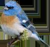 پرنده - خرید پستی مجموعه بی نظیر بیش از 8000 فایل لایه باز با موضوعات مختلف - پایگاه اینترنتی دی ال سل