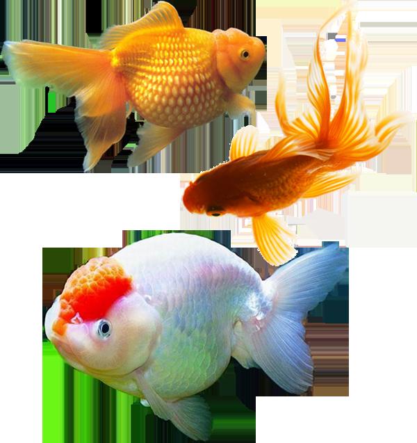 فایل لایه باز ماهی